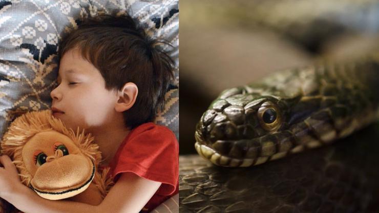 Matka u syna (7) v pokojíčku našla extrémně jedovatého hada. Schovával se v dětské kuchyňce