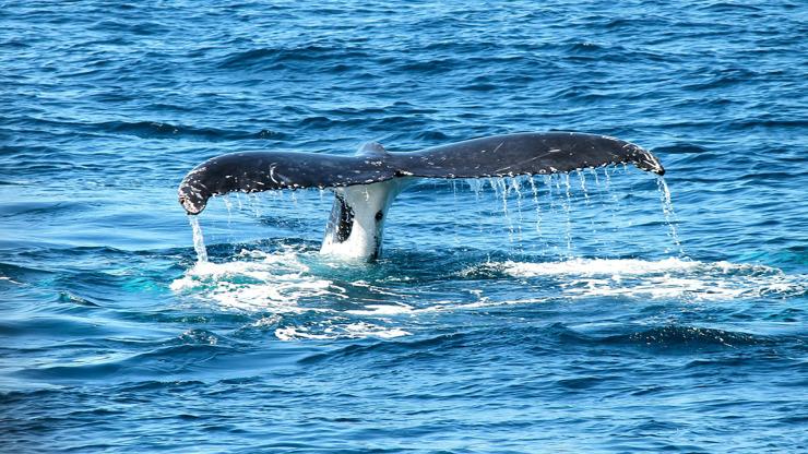 Velryba spolkla potápěče: Muže (57) to málem stálo život. Co na to odborníci?